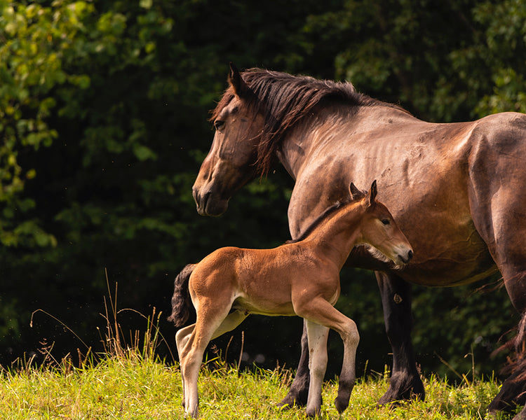 Setting The Stage For Foal Health