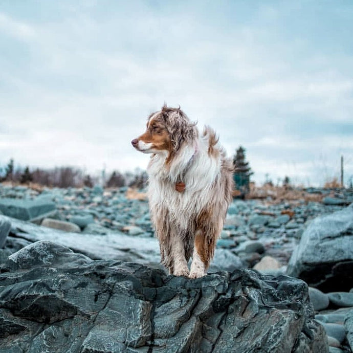 11 Tips to Capture Amazing Photos of Your Dog!