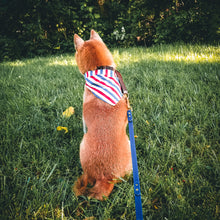 Load image into Gallery viewer, 'Merica Woof Yeah - Reversible Bandana