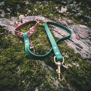 The Explorer Leash - Acadia Green