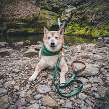 Load image into Gallery viewer, The Mountaineer - Two Tone Leash - Acadia Green