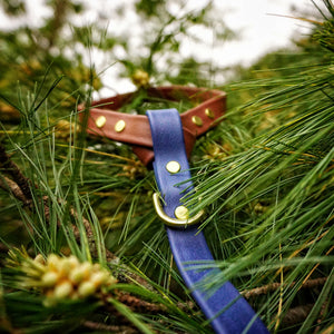 The Mountaineer Leash - Rainier Blue