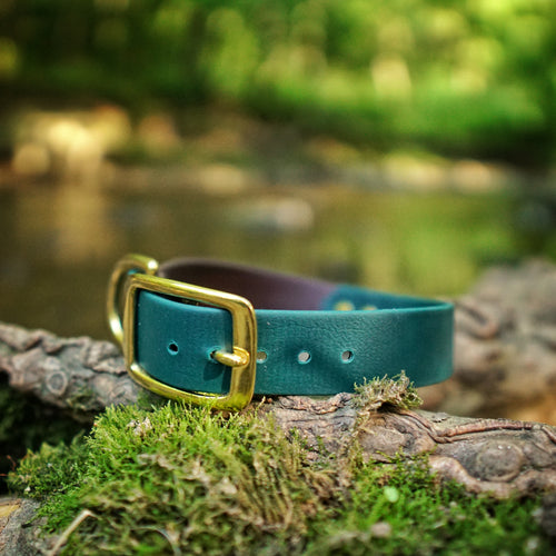 The Explorer - Two Tone Collar - Acadia Green
