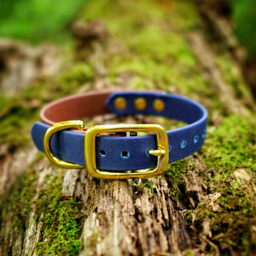 The Explorer - Two Tone Collar - Rainier Blue