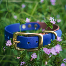 Load image into Gallery viewer, The Explorer Collar - Rainier Blue