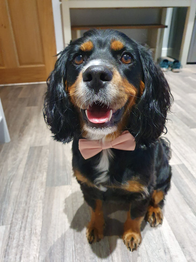 Dog Wedding Bow Tie -