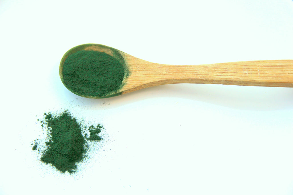 Spirulina powder on wooden spoon