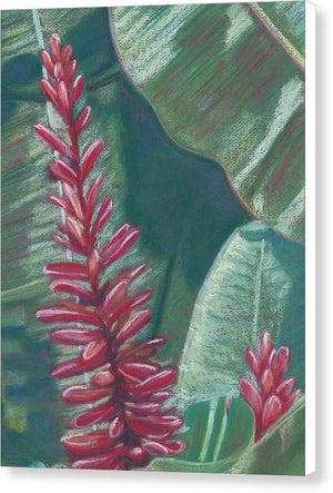 Red Ginger: Canvas Print