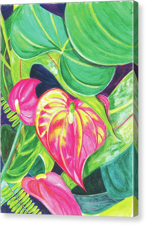 Pink Anthurium - Canvas Print