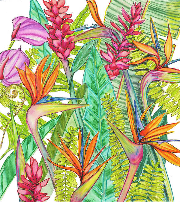 Hawaii Tropical Flowers, Ginger, Bird of Paradise, Anthurium - Art Print