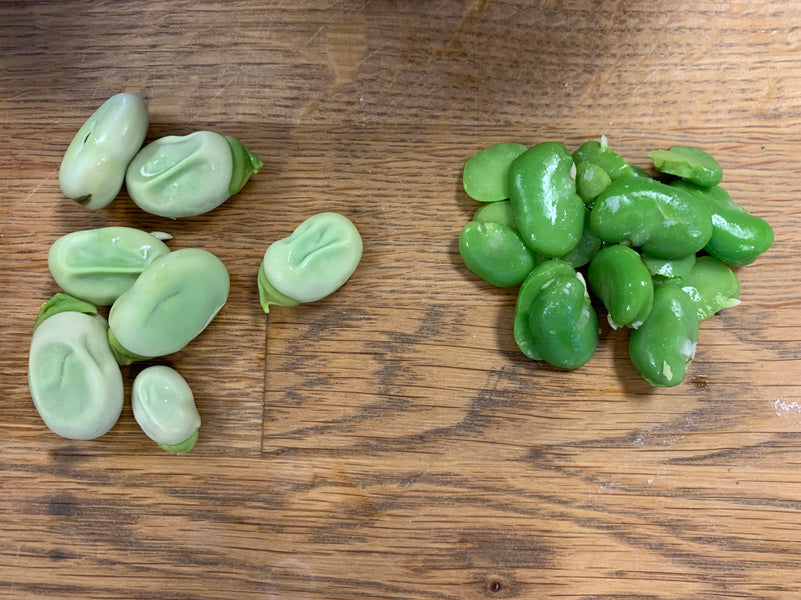 Fava Beans...what the heck do I do with these?????