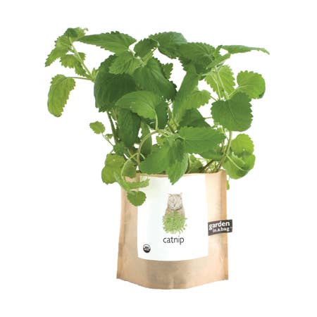 Garden in a Bag | Catnip