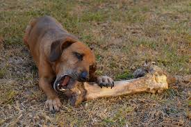 Bones for Your Dog - Delicious Treat or A Deadly Snack?
