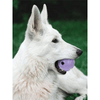 Dog Ball Treat Dispenser Rubber Chew Toy Plaque Cleaner – Purple - Pet Dentist