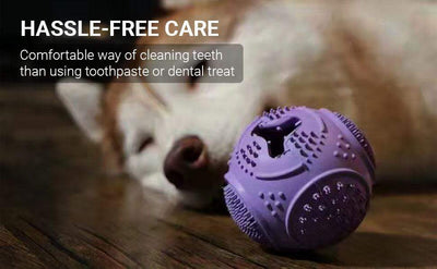 Treat Dispenser Plaque Cleaner Rubber Dog Ball Chew Toy – Purple - Pet Dentist