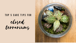 Top 5 Care Tips for Closed Terrariums