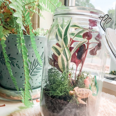 care-tips-for-closed-terrariums