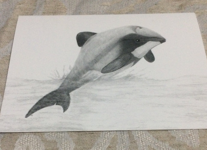 Cards - Hector's Dolphins