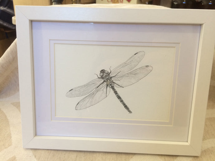 NZ Giant Dragonfly