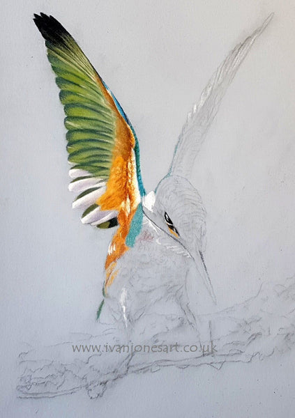 A good start to this stunning kingfisher in pastel for the next exhibition