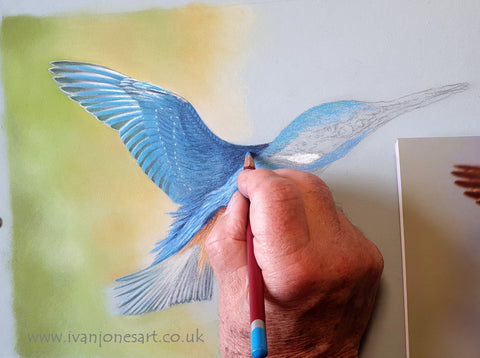 Kingfisher artwork Ivan Jones in progress