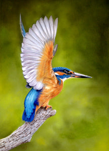 This common kingfisher was sold during H-art week