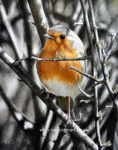 Cheeky Chappy Robin pastel painting sold Ivan Jones artist