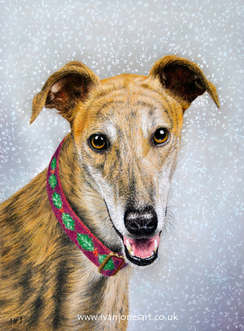 Greyhound Trust Christmas dog portrait commission Ivan Jones pastel artist