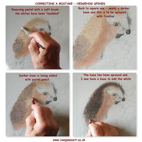 Correcting a mistake on pastel painting of hedgehog Ivan Jones