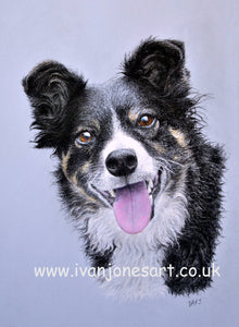 Daisy one of my recent pet portrait commissions
