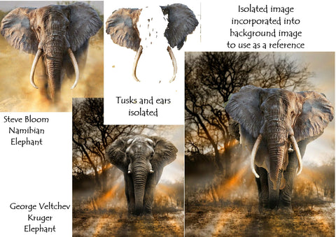 Ivan Jones pastel artist steps to creating elephant reference photos