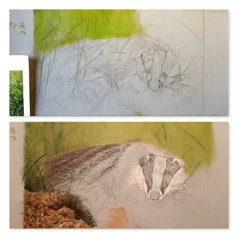 Early stages of badger artwork in progress Ivan Jones pastel artist