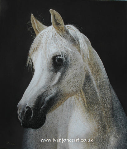 Arabian horse pastel artwork sold Ivan Jones artist