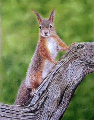 Red squirrel pastel artwork sold Ivan Jones pastel artist