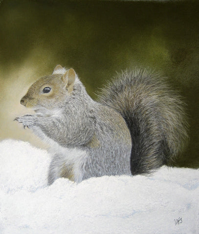 Grey squirrel in snow artwork sold Ivan Jones pastel artist