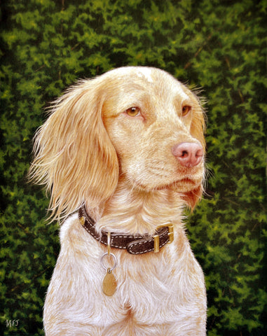 Liesl, a commissioned pet portrait Ivan Jones pastel artist