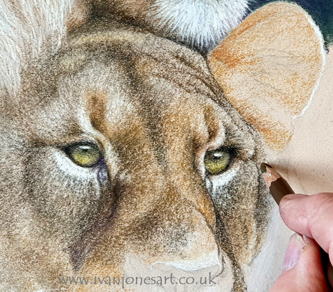 Adding detail with pastel pencils Ivan Jones pastel artist