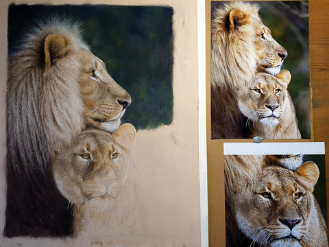 lion and lioness with reference photos Ivan Jones pastel artist