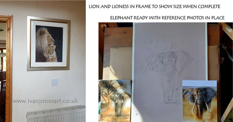 Lions framed, elephant set up with reference photos Ivan Jones pastel artist