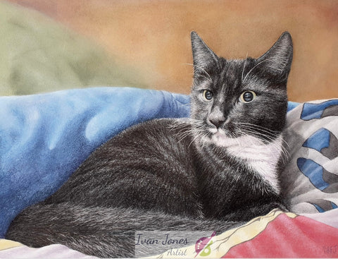 Loki, commissioned cat portrait, award winner, Ivan Jones pastel artist