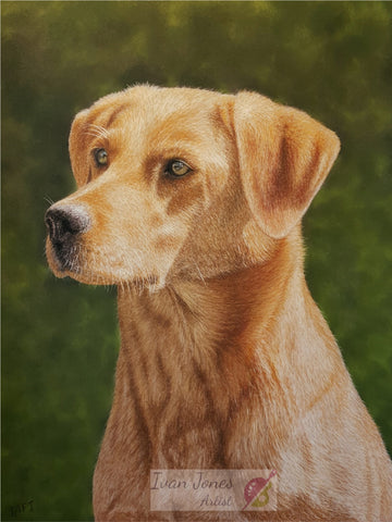 Macey pet portrait commission. Ivan Jones pastel artist
