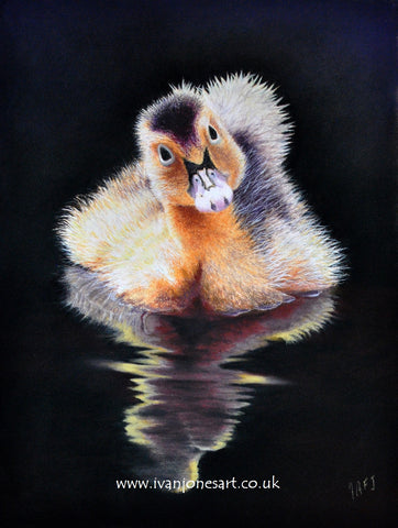 Maiden voyage duckling pastel painting sold Ivan Jones artist
