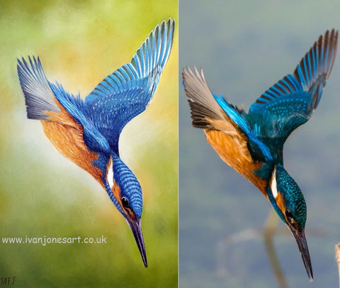 Making a splash - painting and reference kingfisher - Ivan Jones artist