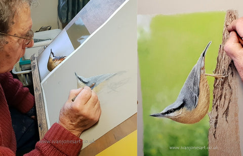 Nuthatch pastel artwork in progress Ivan Jones artist