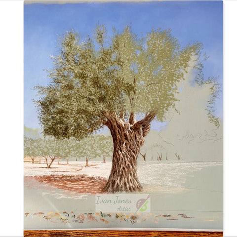 Olive tree commission artwork in progress Ivan Jones pastel artist