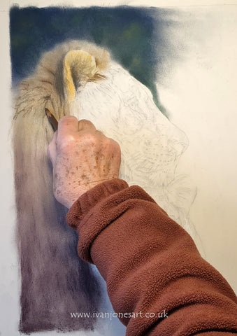 Adding layers to the mane on the lion Ivan Jones pastel artist