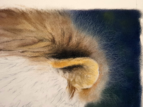 Details on lion mane created with pastel pencils Ivan Jones pastel artist
