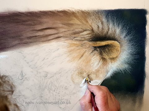 Adding detail to lion eye Ivan Jones pastel artist