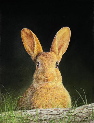 Rabbit pastel painting sold Ivan Jones artist