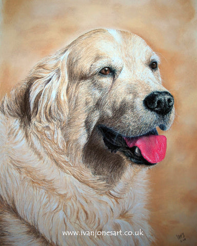 Shannon labrador retriever pet portrait commission Ivan Jones pastel artist